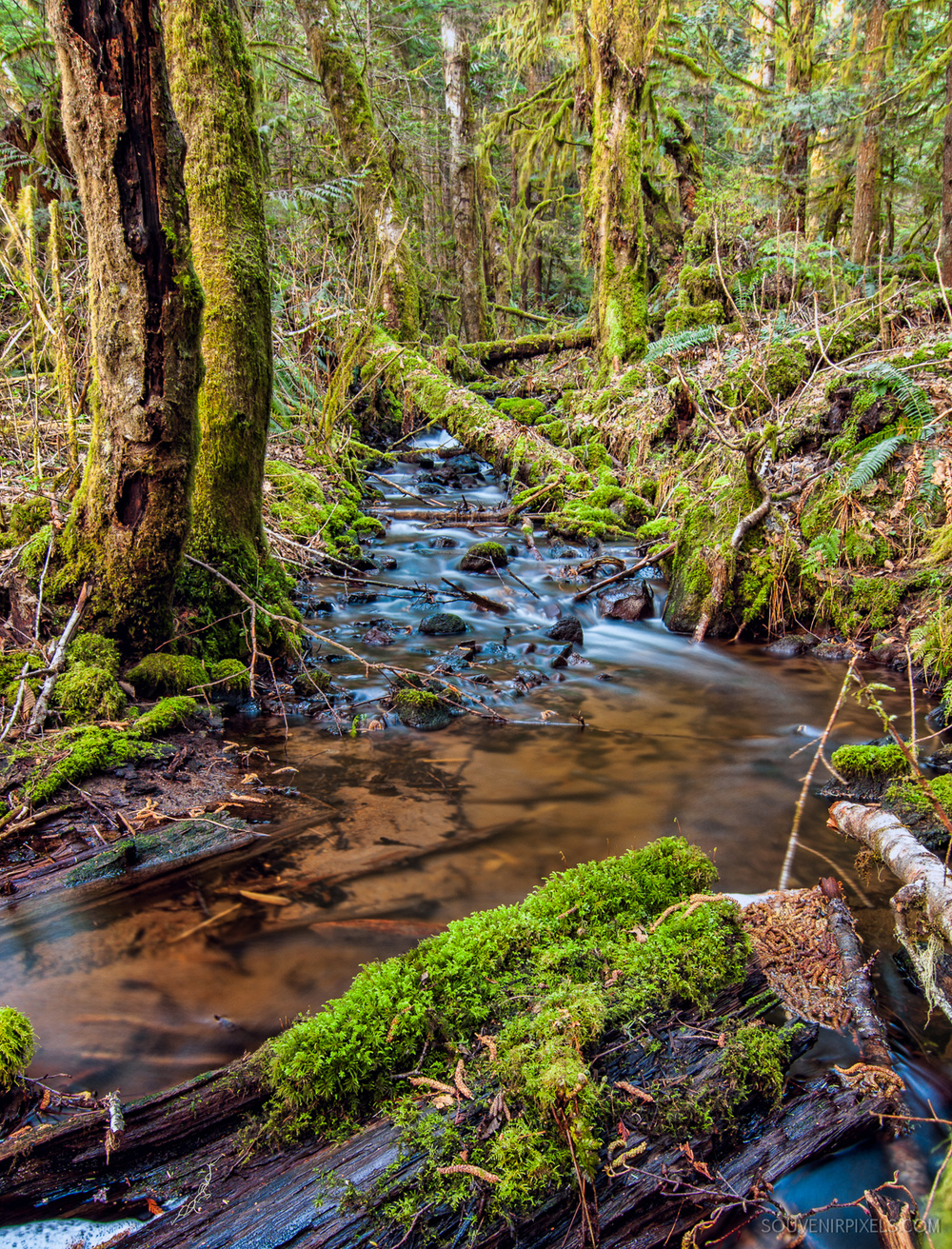 P0391-Mossy Trees of Squamish-XLarge.jpg