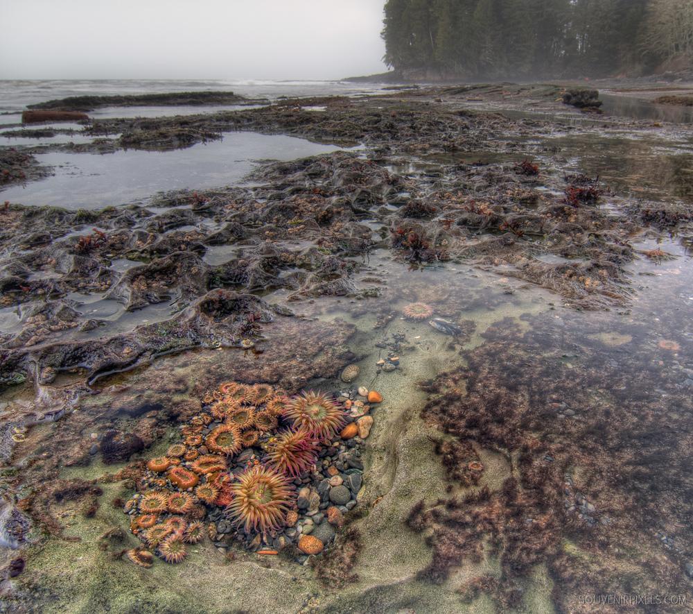 P0134-Botanical Beach-XLarge.jpg
