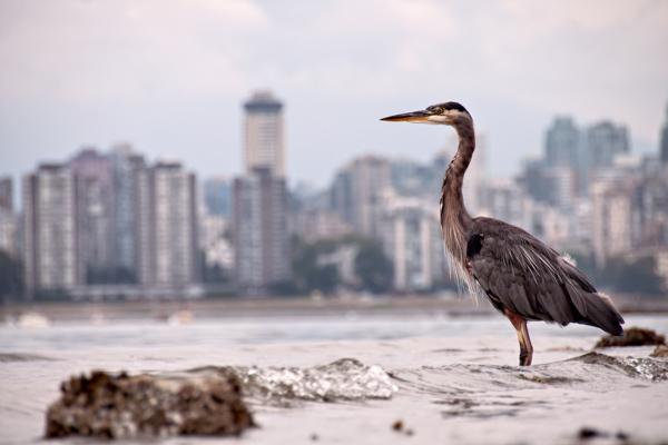 Vancouver - Kitsilano