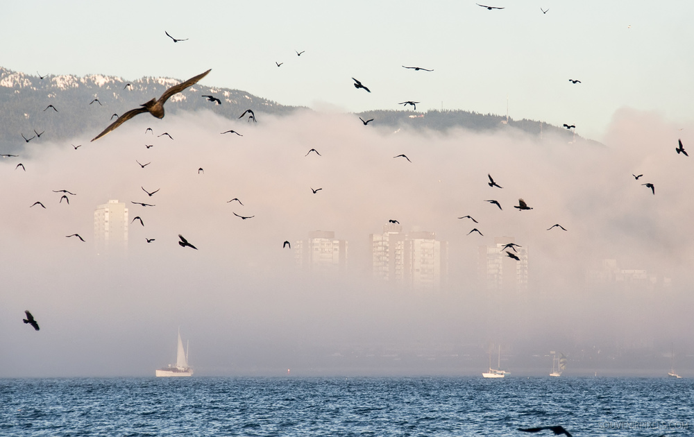 P0357-Misty City-XLarge.jpg
