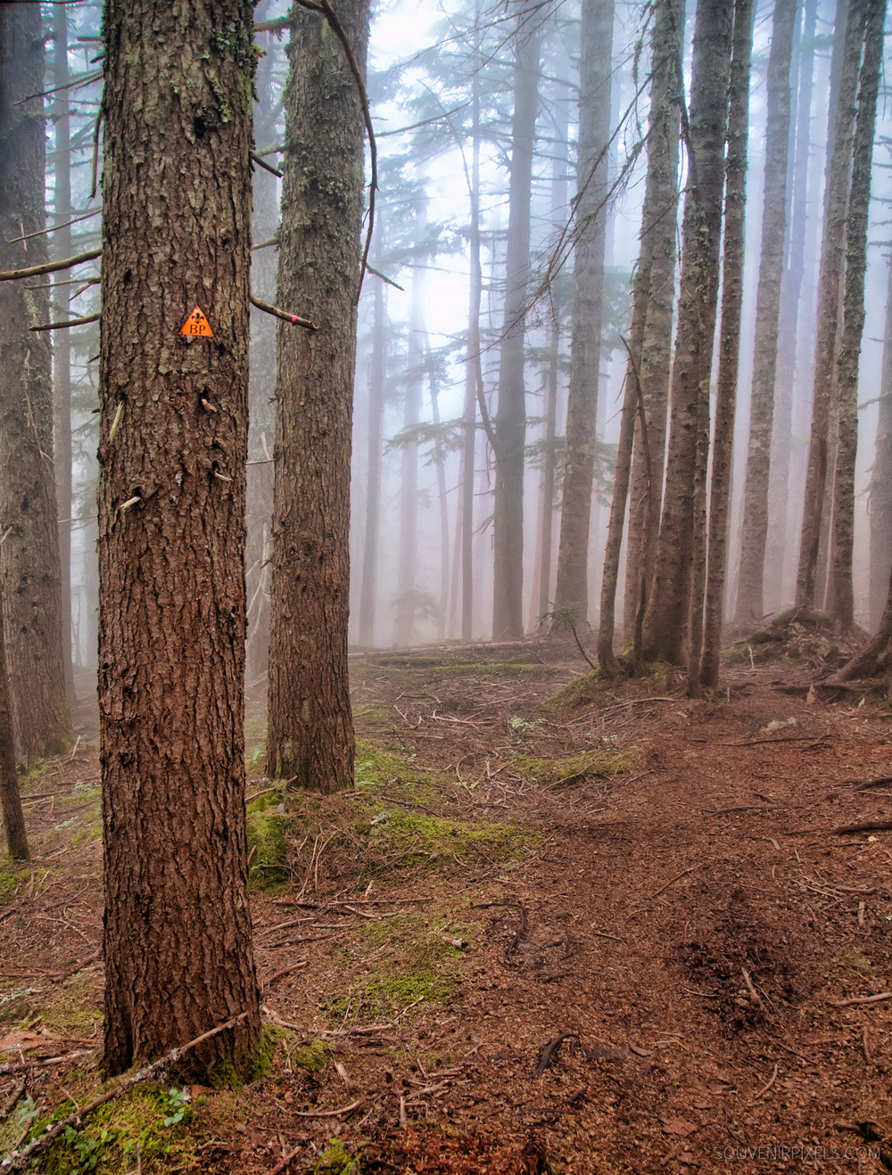 P0242-Baden Powell Trail Marker-XLarge.jpg