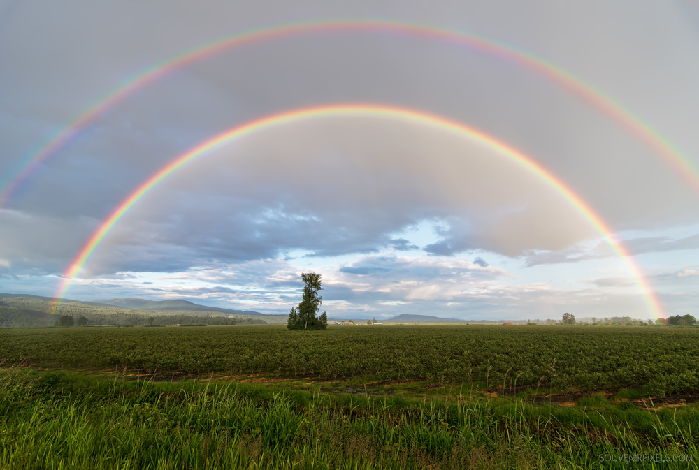 P0479-Maple Ridge Rainbow-XLarge.jpg