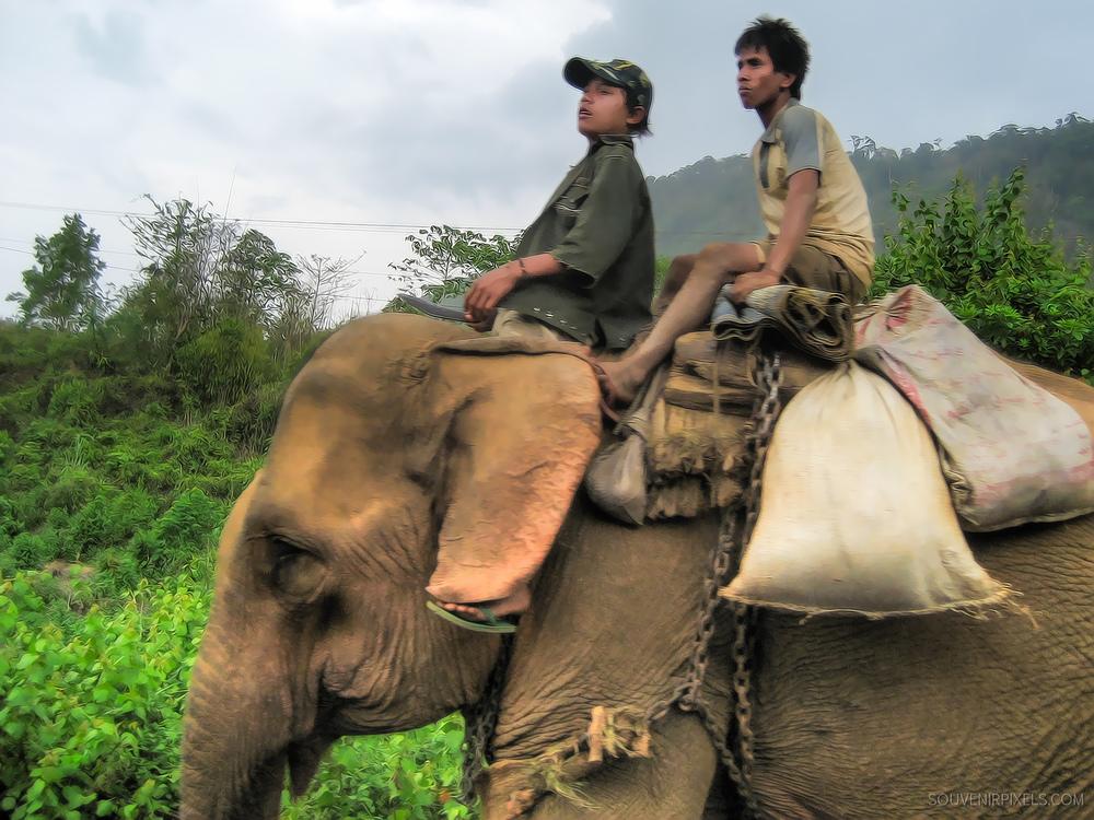 P0045-Elephant Rides-XLarge.jpg