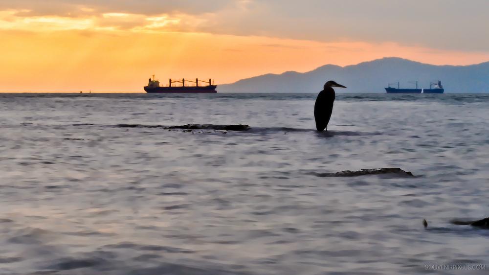 P0067-Heron Fishing-XLarge.jpg