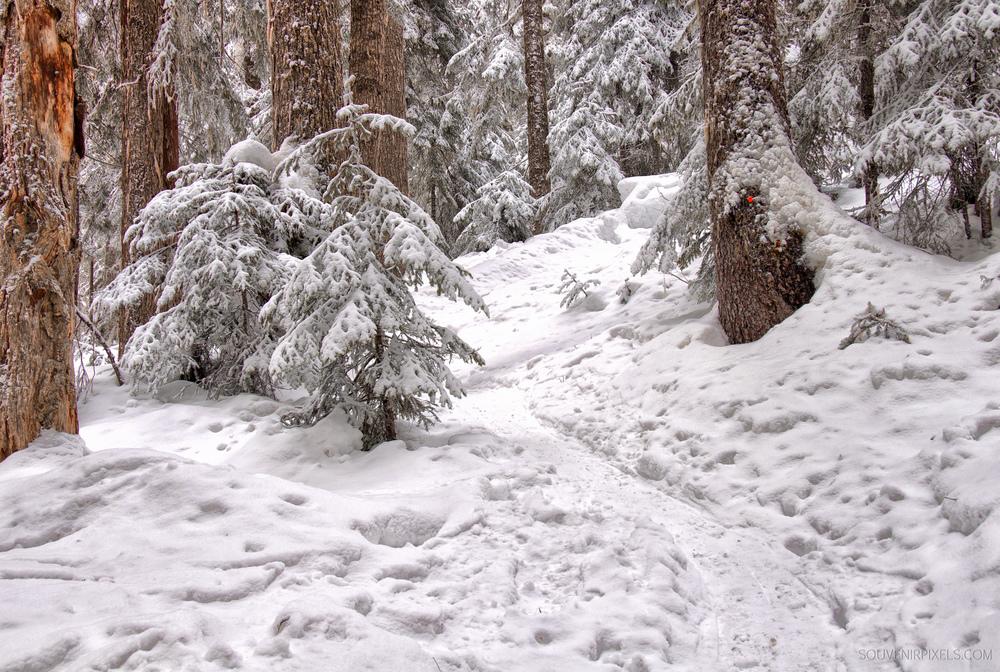 P0254-Snowshoe Trail-XLarge.jpg