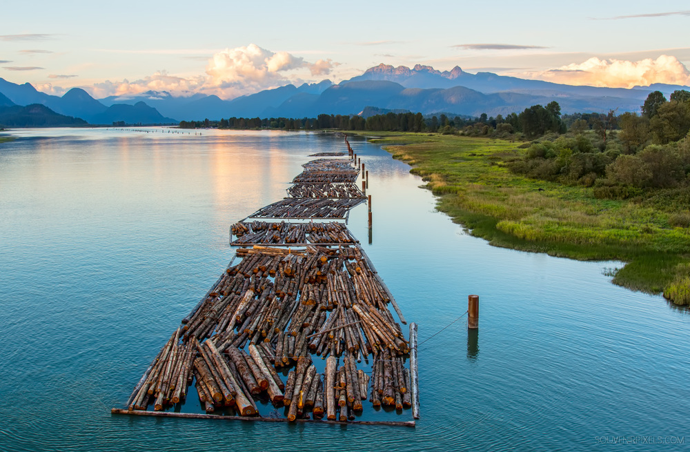 Maple Ridge & Pitt Meadows Lakes-P0704-Pitt River Logs-XLarge.jpg