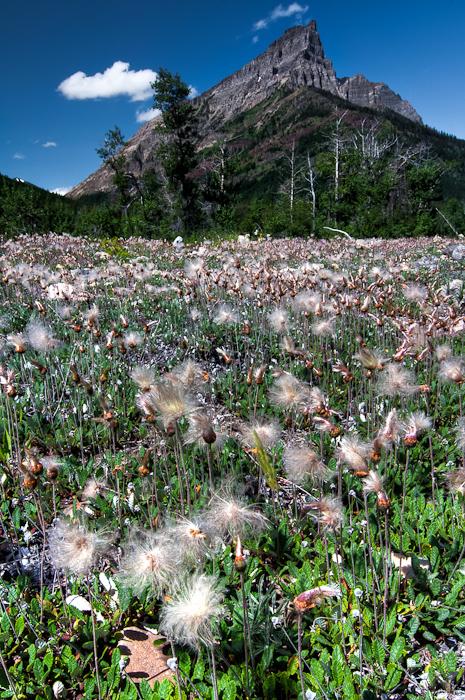 Field Of Seeding Flowers