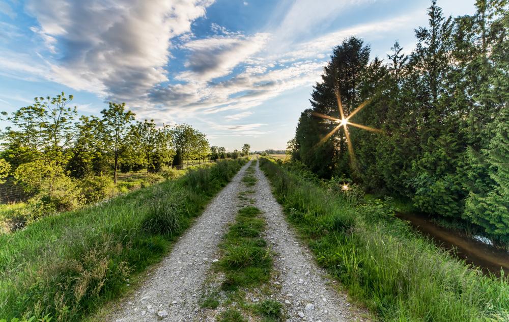 Laneway Sun Star