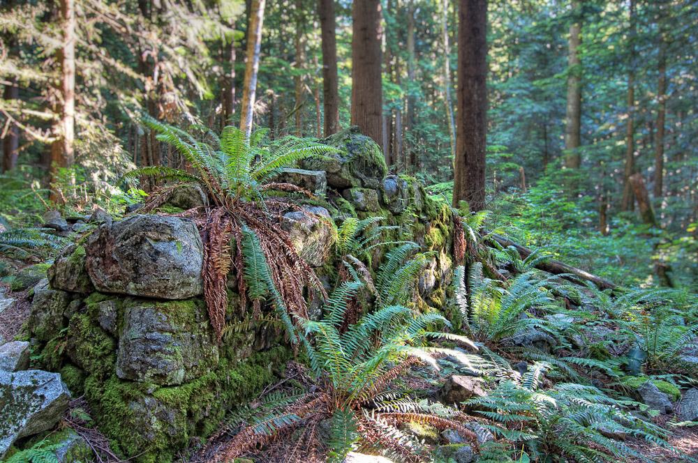 Hidden Rock Wall