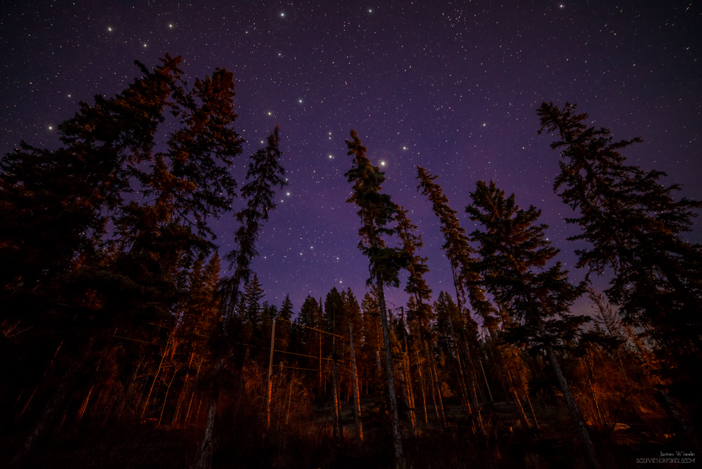 Fire lit Forest