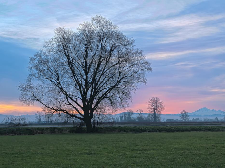 Leafless Tree