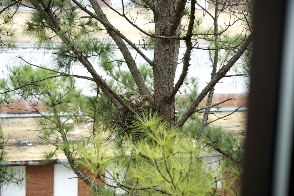 Nest Location