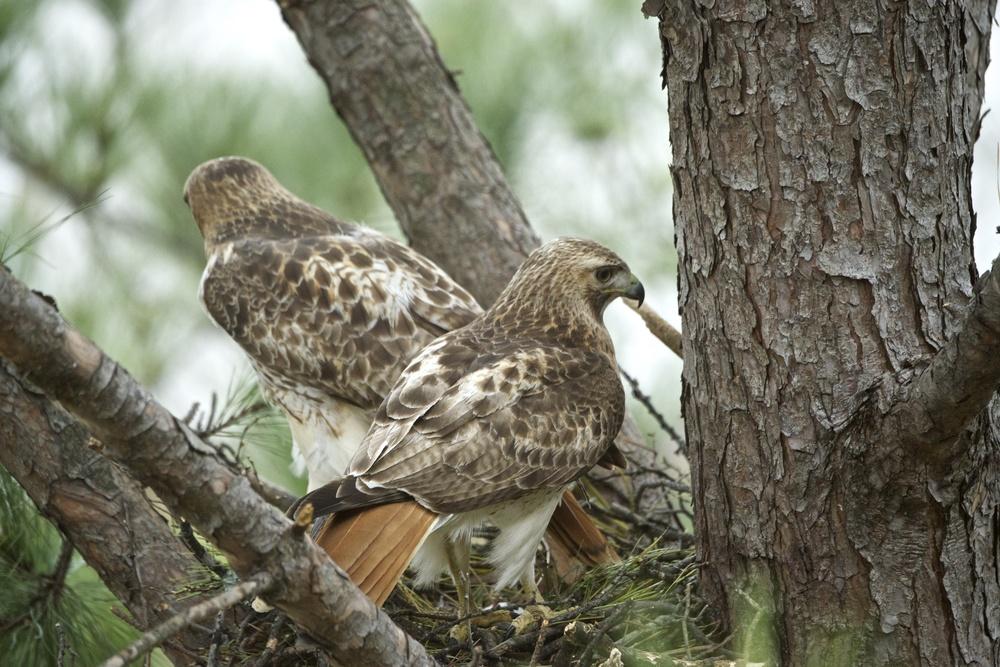 Female Leaves the Nest