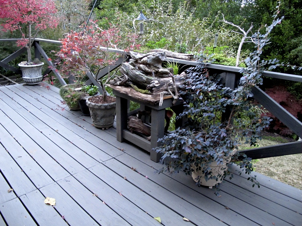 Water feature on deck with plants