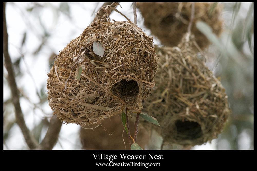 Village Weaver Nest.jpg