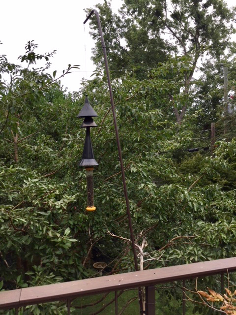"Hang feeder on a 24"" long wire over edge of deck or tree limb.  Funnels added for squirrel proofing."