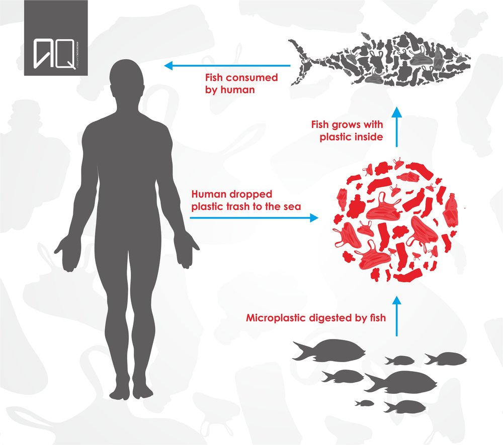 fish poison GRAPHIC FINAL.jpg