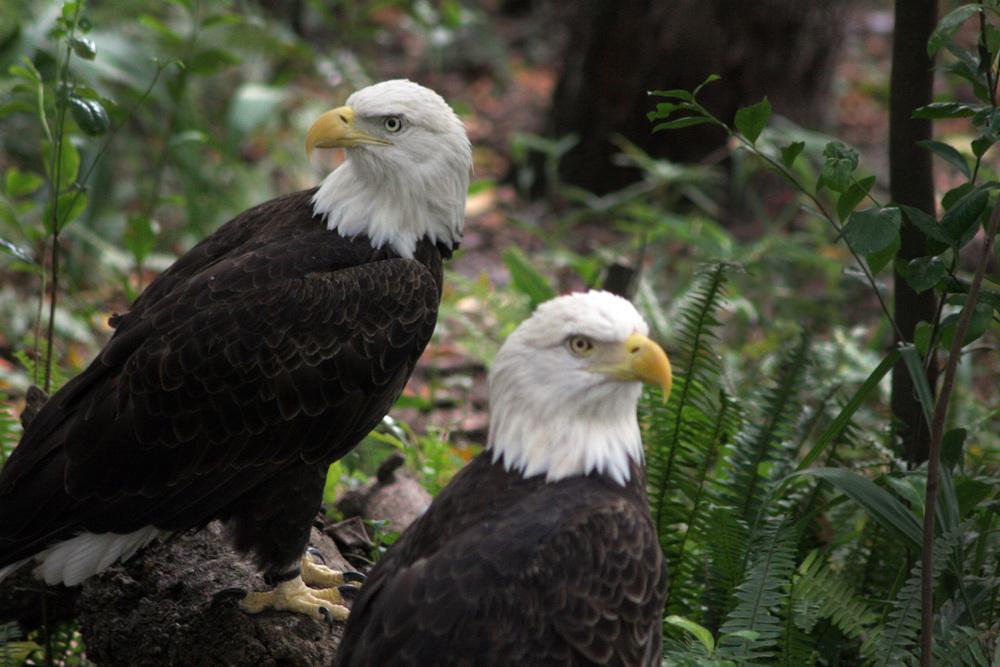 Birds 19.jpg