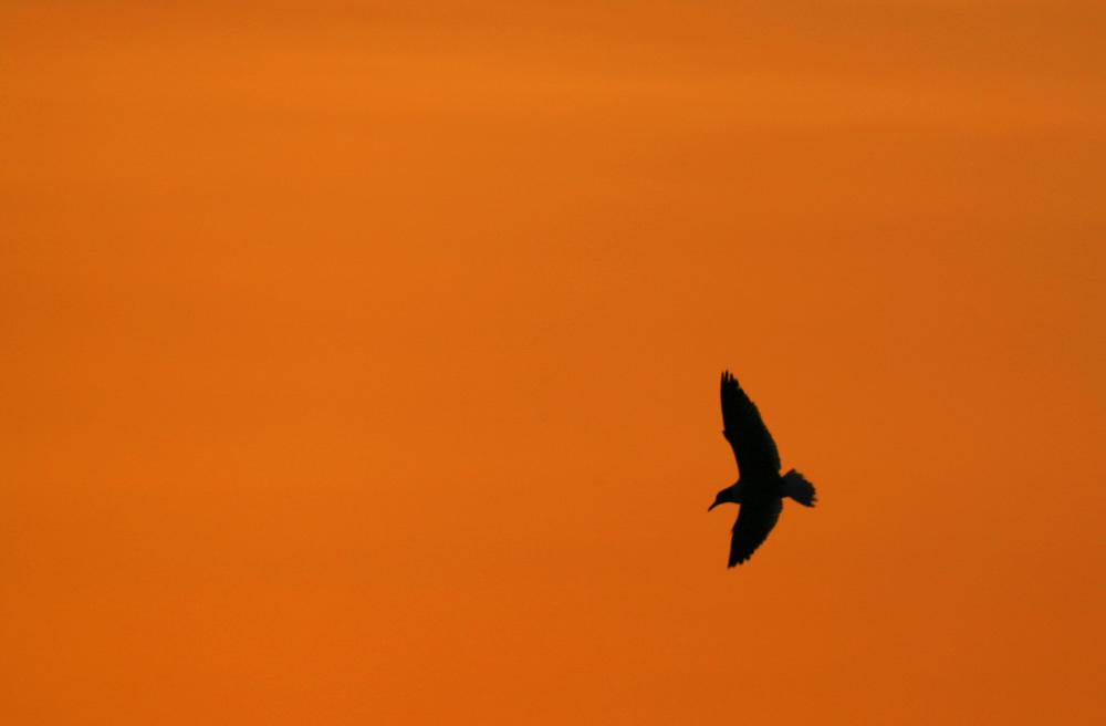 Birds 27.jpg