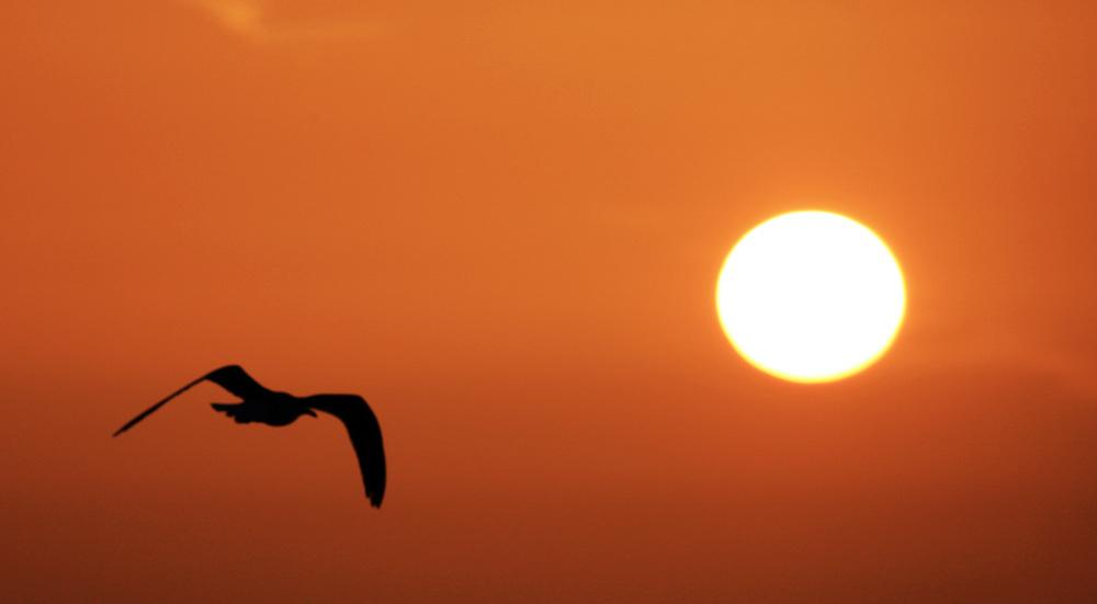 Birds 28.jpg