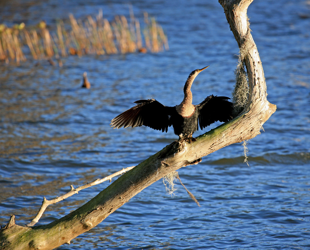 Birds6.jpg