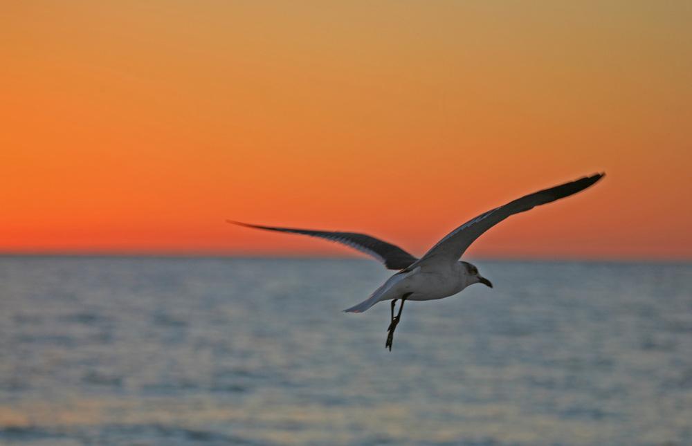 Birds11.jpg
