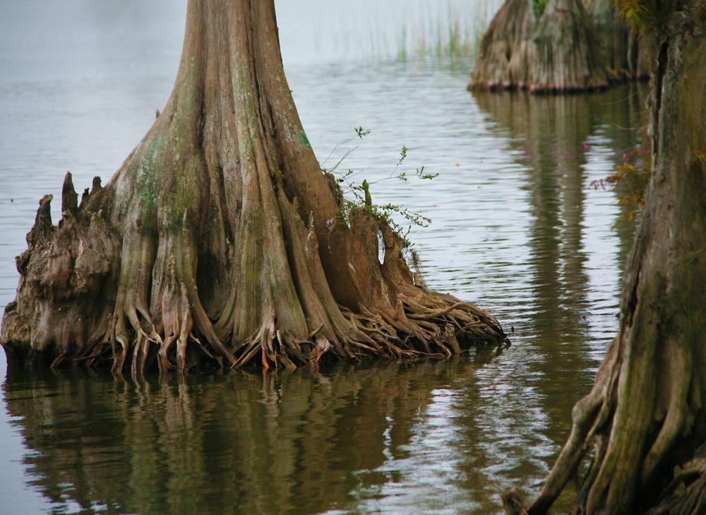 Cypress2.jpg
