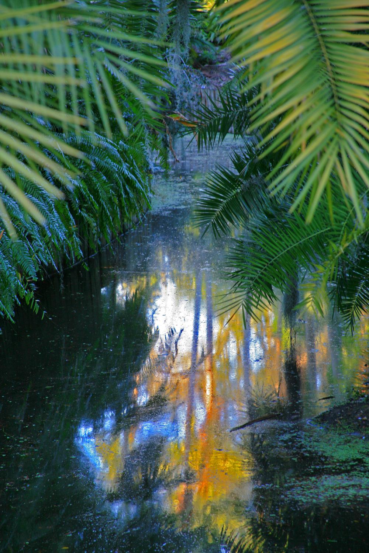 Nature 6a.jpg
