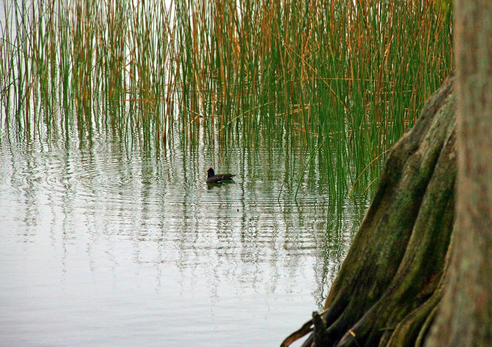 Nature 7a.jpg