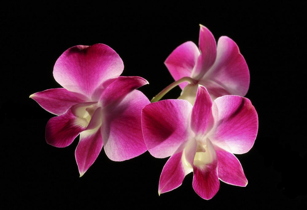 orchid 3.jpg