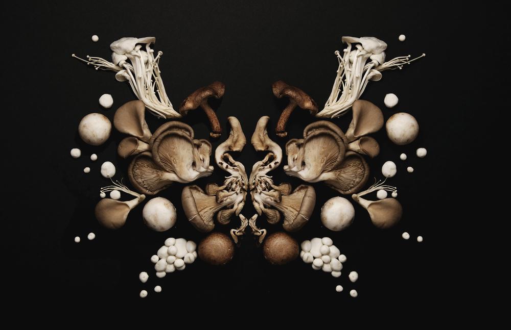 Mushroom ink blot 2.jpg