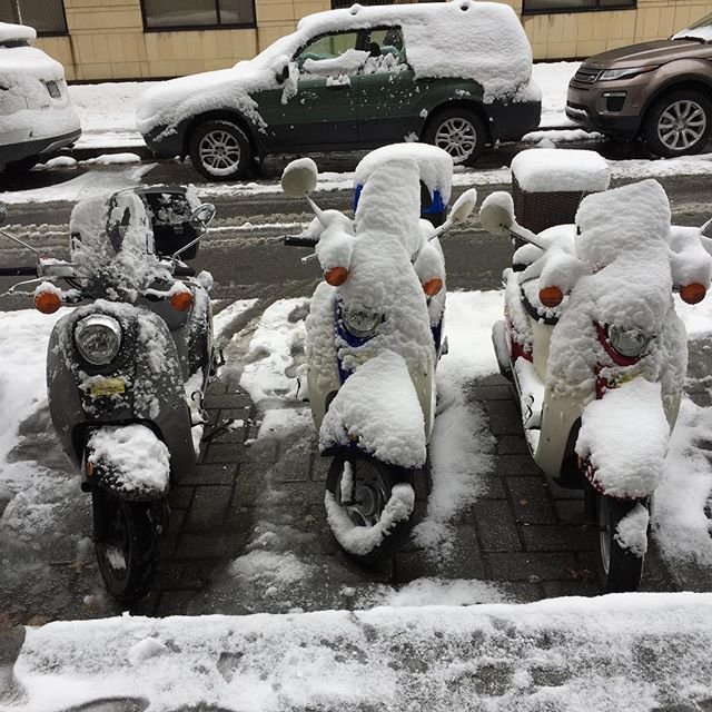 Snow is of no concern. Scoot or die. Make Montreal Great Again.