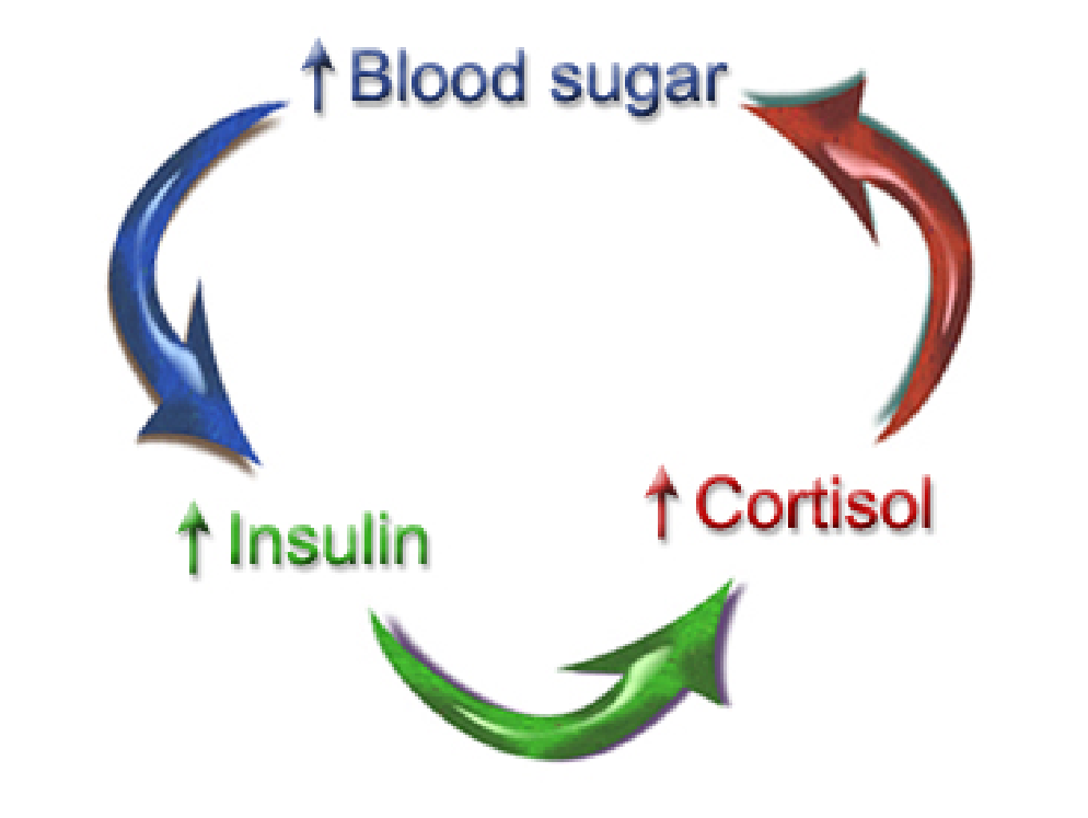 blood-sugar-cycle