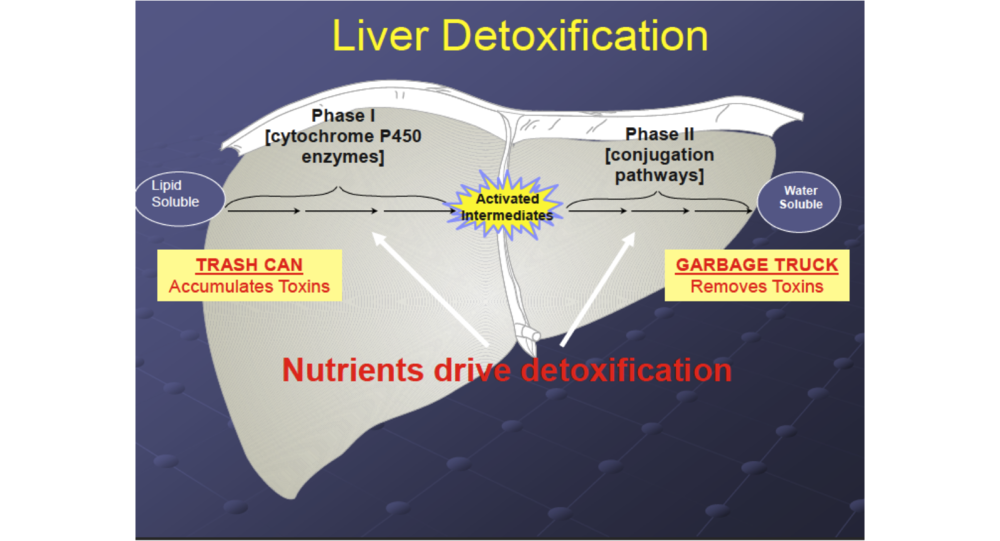 Liver Detoxification factors