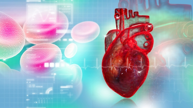 Statins increase risk for heart disease