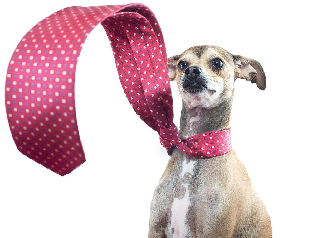 Dexter-Tie.jpg
