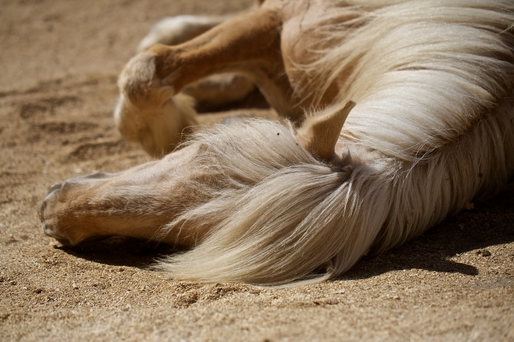 Draumur takes a nap