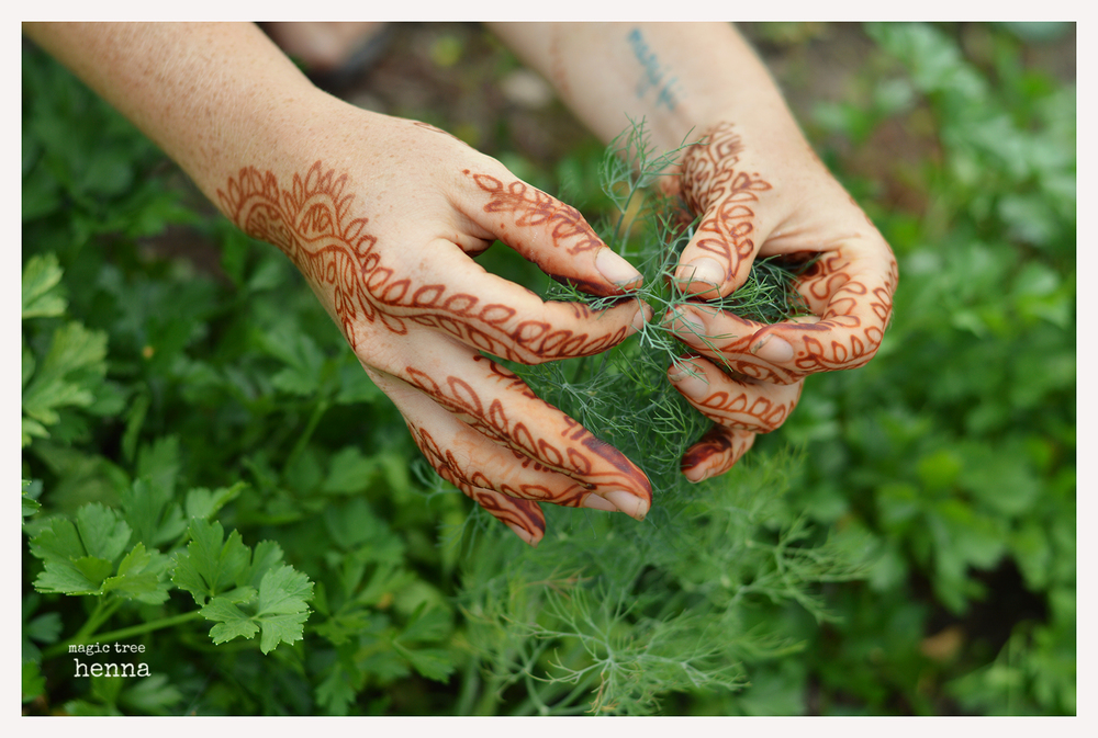 Blog Magic Tree Henna