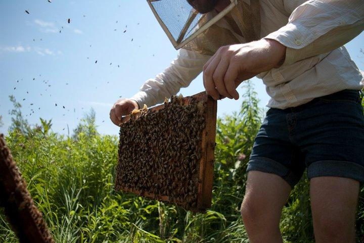 beekeeper.jpg