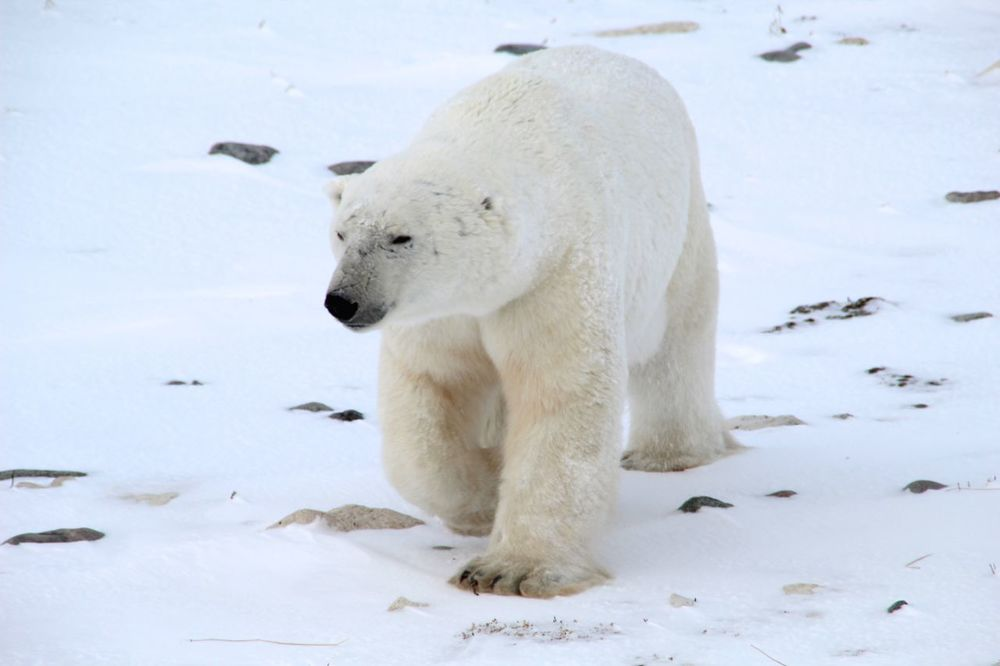 bearsbears4.jpg