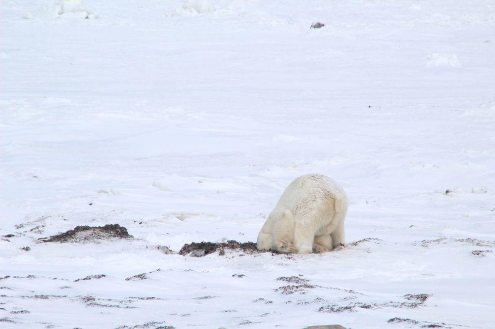 bearsbears7.jpg