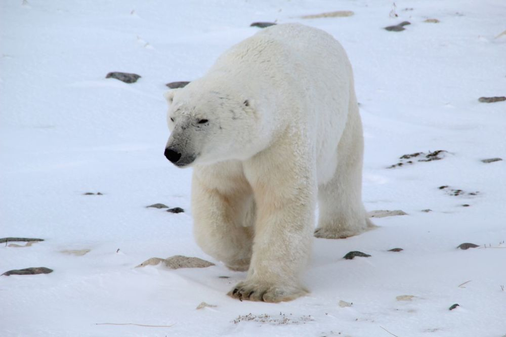 Polars09.jpg