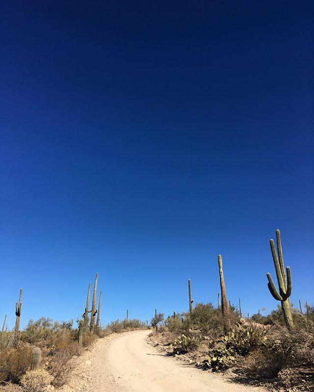 Desert road 🌵 @saguaronationalpark