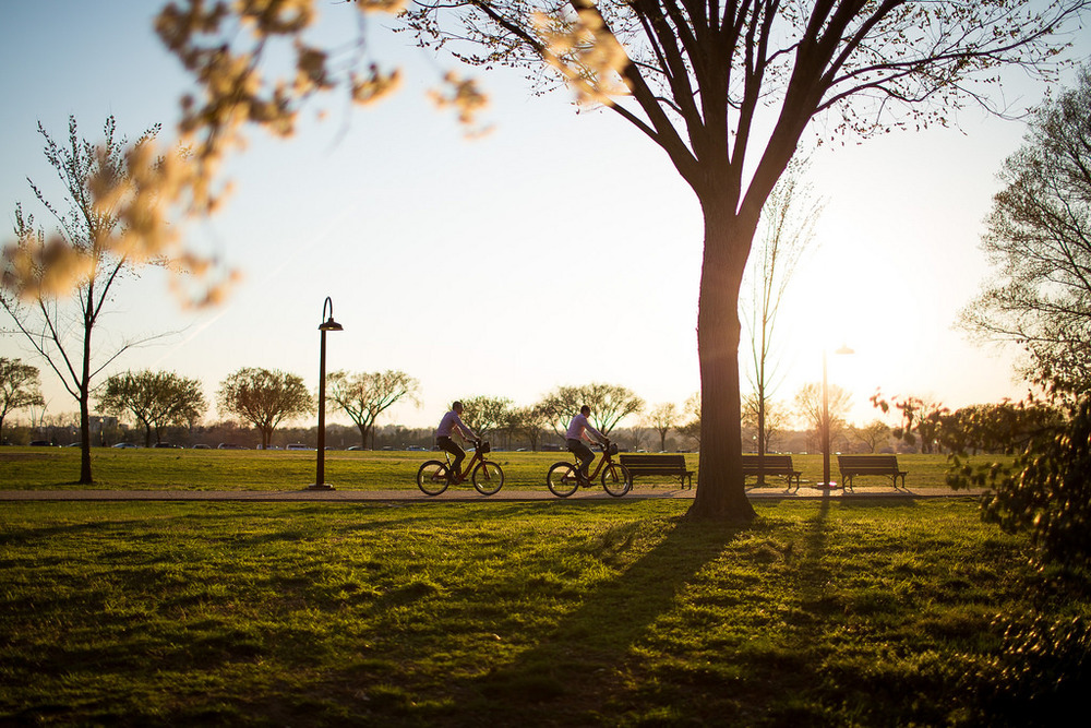 cherry blossom sunset cyclists.jpg