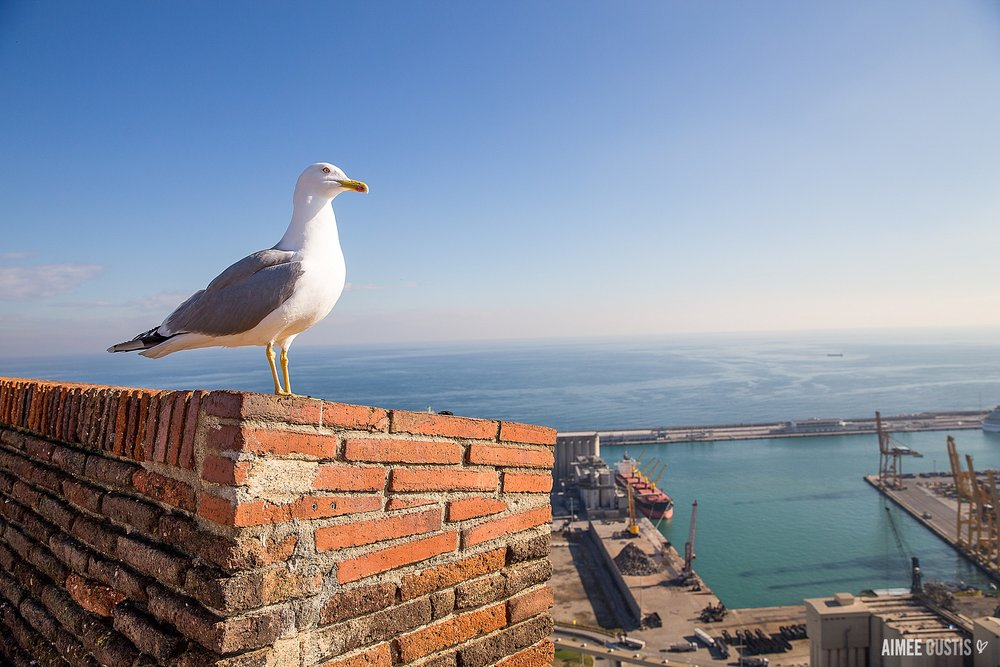 Obligatory seagull photo, because I ALWAYS manage to take a seagull photo on vacation. Oh, and Barcelona's working port, stage right in the background.