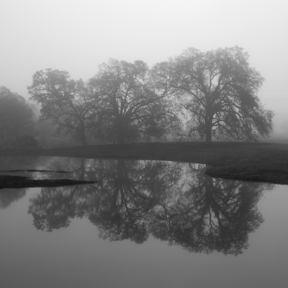 Wetland_with_Oak_Copse.jpg