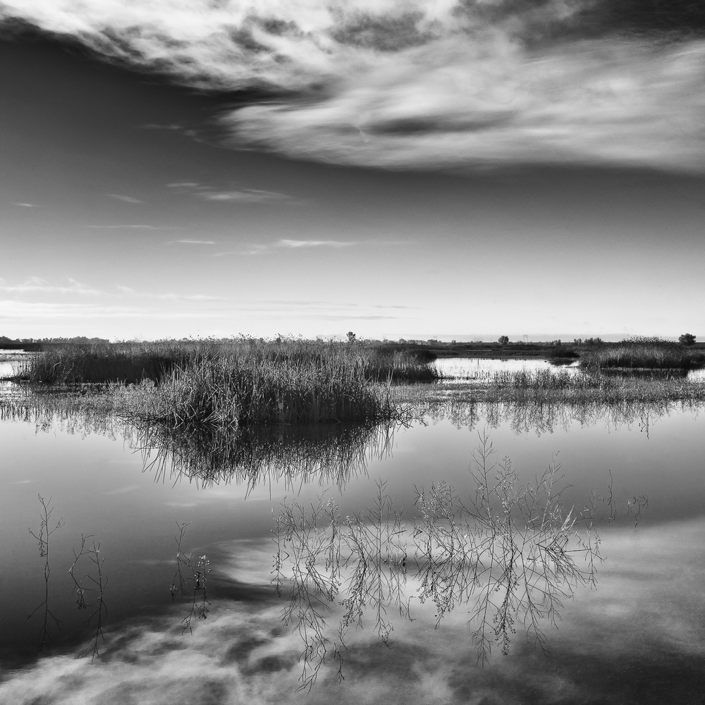Wetland, Study 1, Yolo Bypass Wildlife Area, Yolo County, Califo