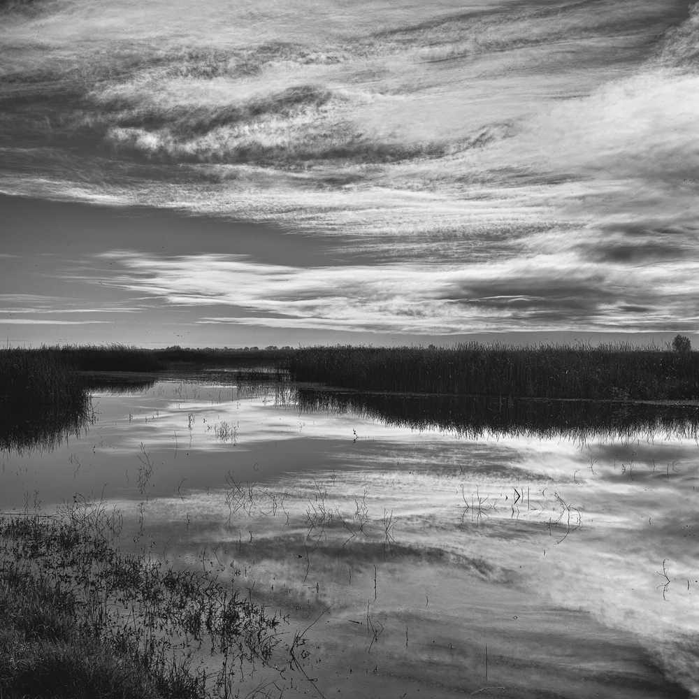 Wetland, Study 2, Yolo Bypass Wildlife Area, Yolo County, Califo