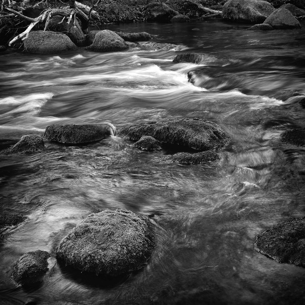 Pocket Water, Study 3, Putah Creek, Solano County, California