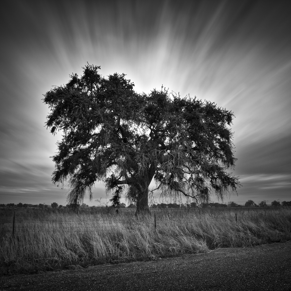 Grandfather Oak II